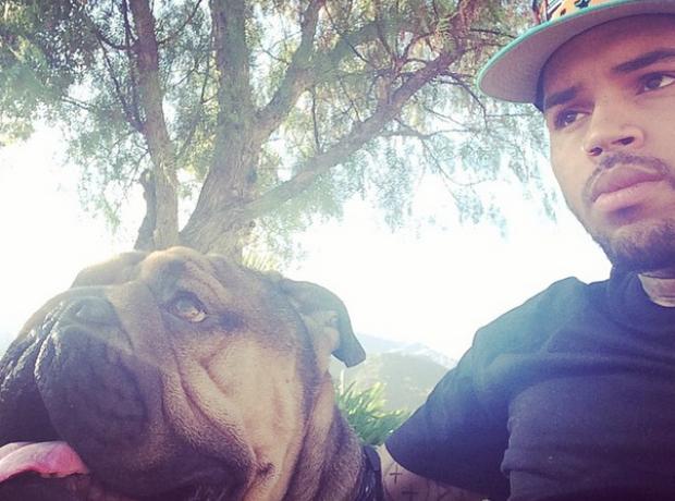 Chris Brown dog