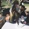 Image 5: Kylie Jenner Tyga Coachella 2016