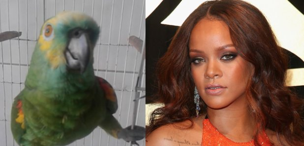 Parrot Does Amazing Impression Of Rihanna